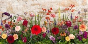 گل ها و گیاهان پاییزی